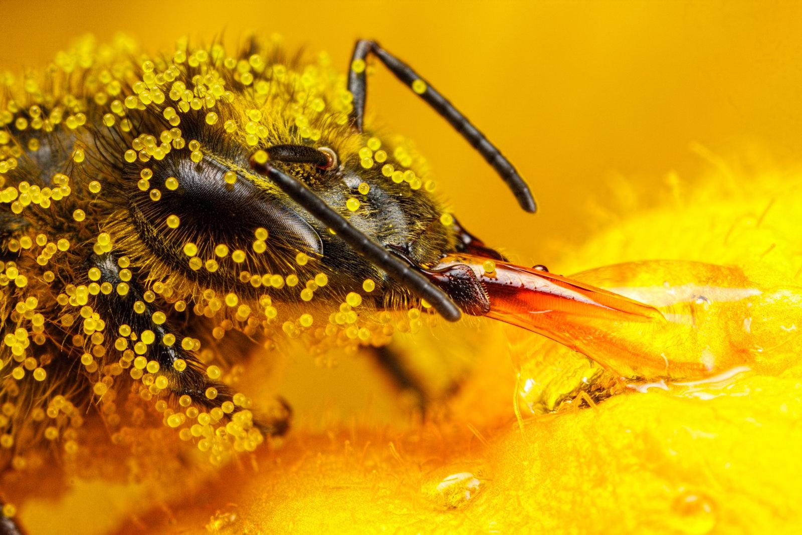 Çocuklarda polen tüketimi nasıl olmalı?