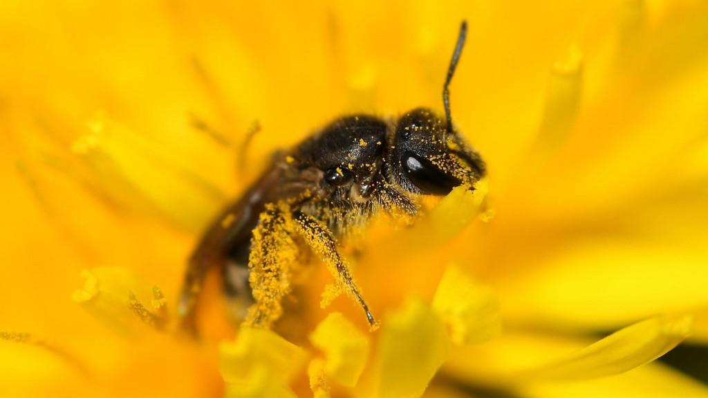 Arı Poleni Nedir? Faydaları Nelerdir? Nasıl Tüketilmeli ve Saklanmalı?